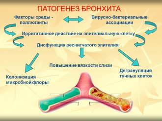 Бронхит бактериальный или вирусный