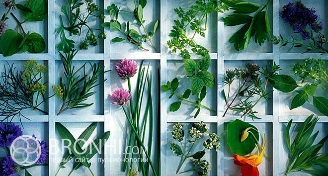 Лечебные травы в борьбе с бронхитом