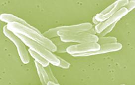Лечение туберкулеза легких – основные принципы