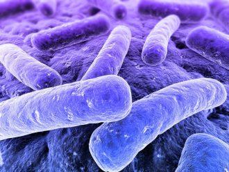 Виды туберкулеза легких